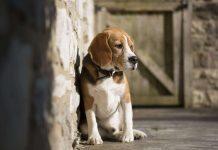 sparizione cani