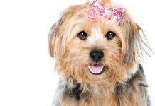 sterilizzare cane femmina