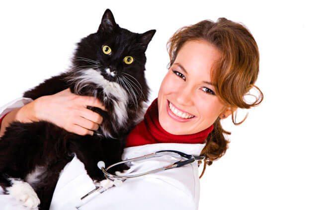 sterilizzazione della gatta