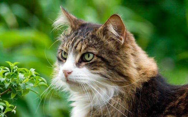 stomatite gatto cure naturali