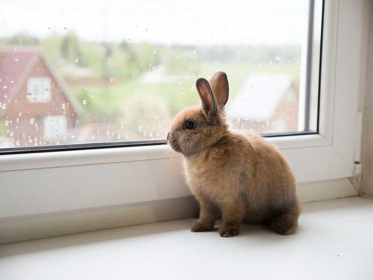 storia del coniglio nano