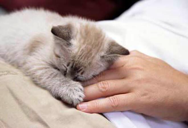 sverminare gatto