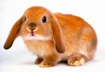 svezzamento conigli