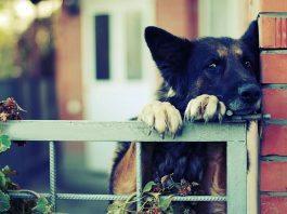 territorio cane