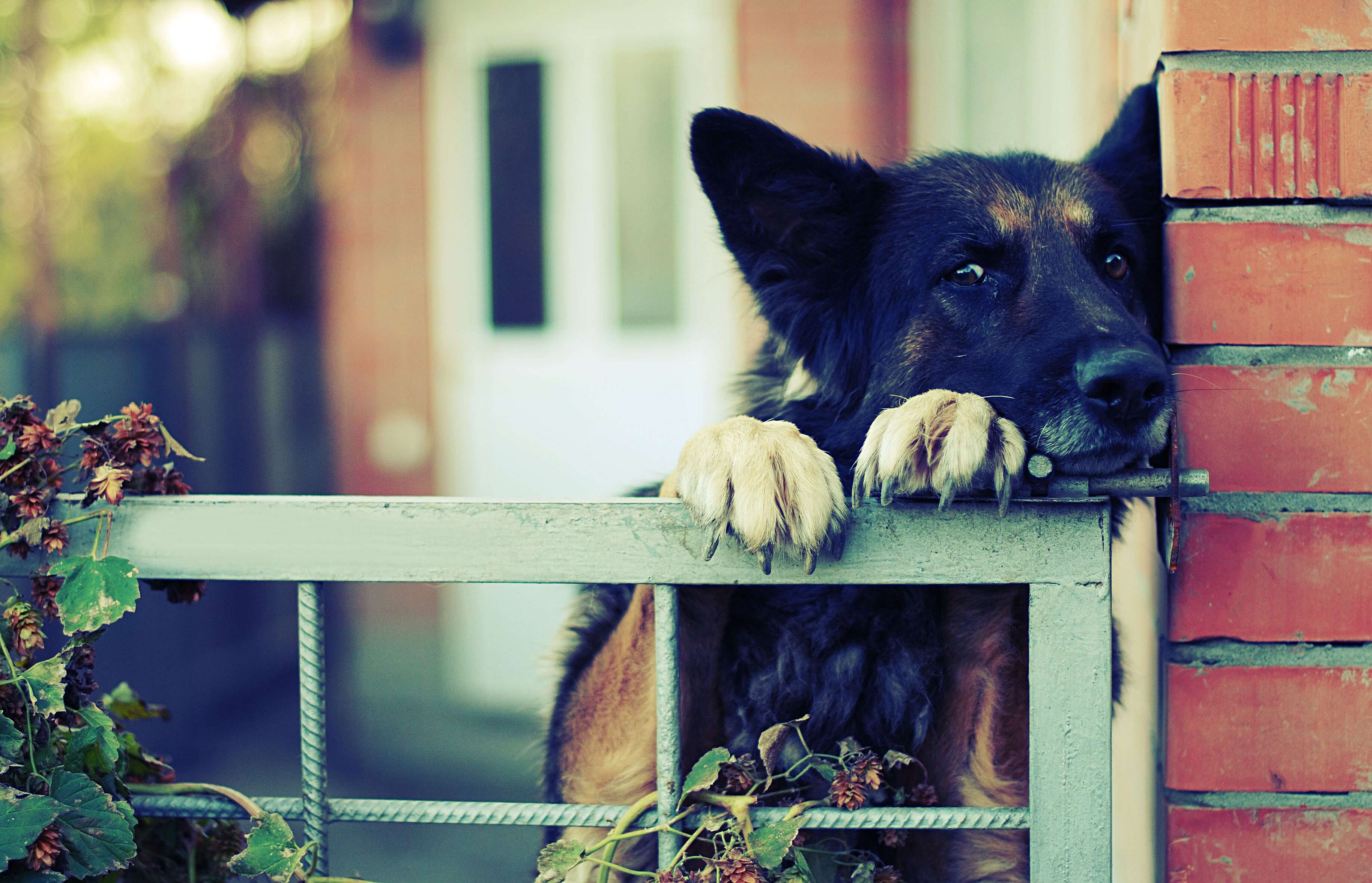 territorio canino