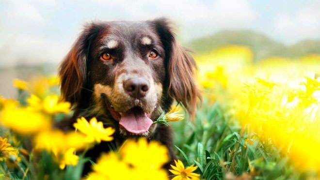 tranquillanti per cani