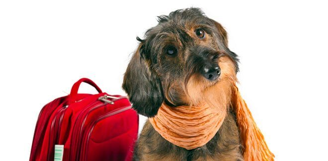 trasportino cani aereo