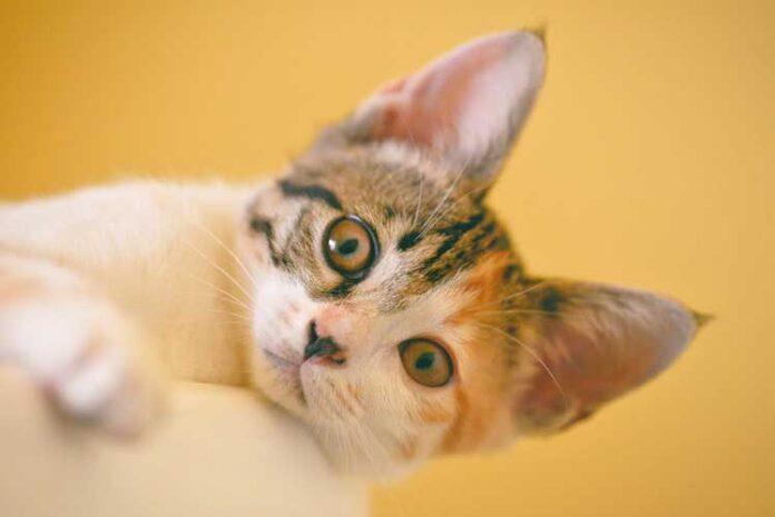 vaccini per gatti obbligatori