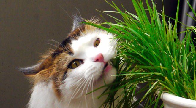 veleno per gatti