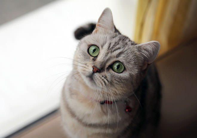 giardia gatto