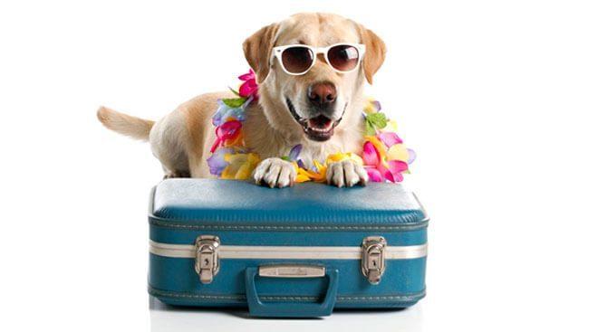 vacanza con fido
