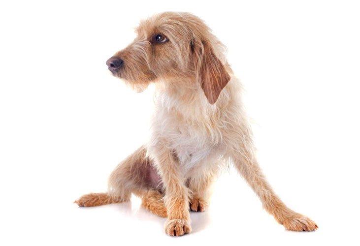 cura dei cuccioli