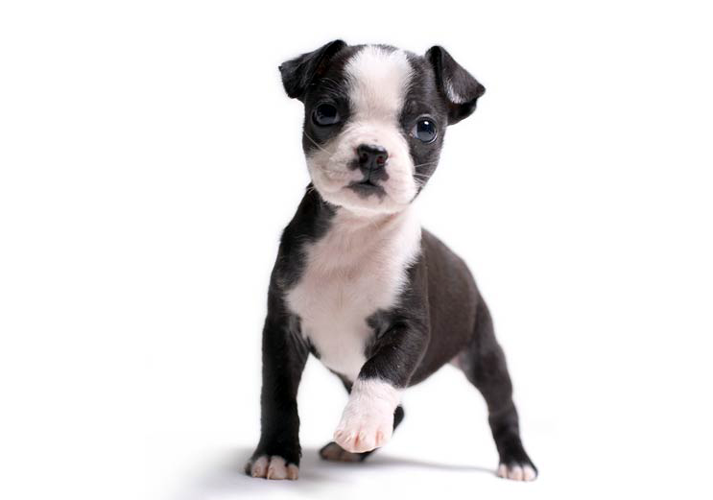 prezzo di un cucciolo