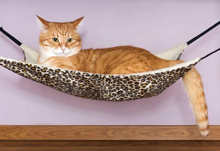 amaca per gatti fai da te