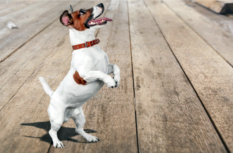 cane agitato