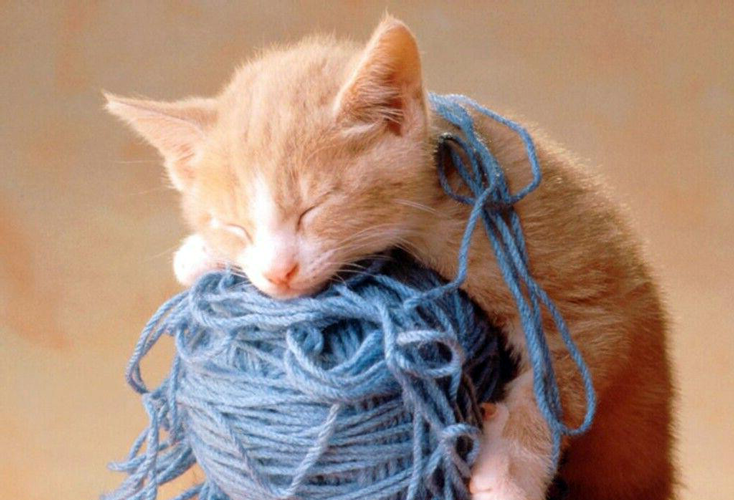 gatto che mangia lana