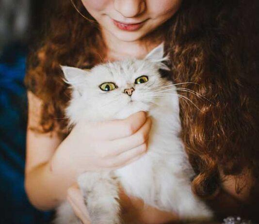 gatti leccano capelli