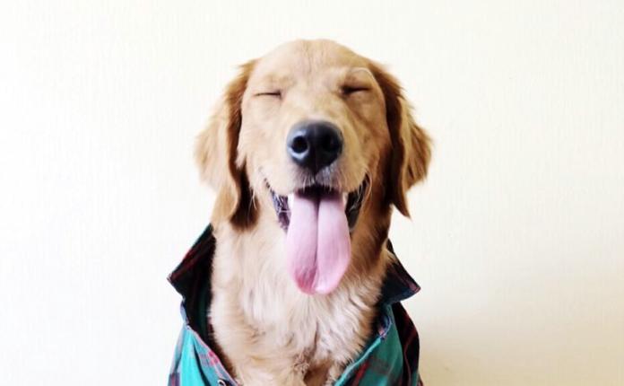 giochi intelligenti per cani fai da te