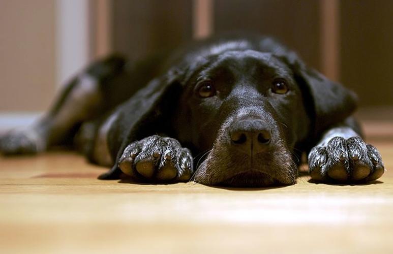 Cura lussazione rotula cane