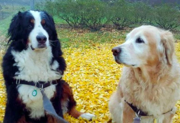 rovigo amicizia tra cani