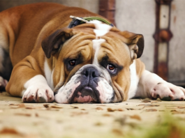 sangue nelle feci del cane