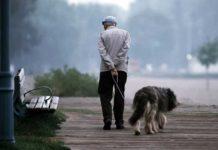 cani e persone anziane