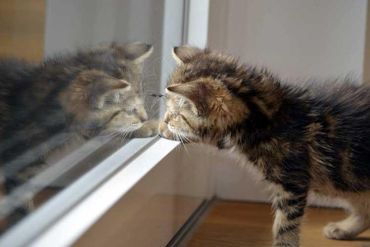 gatto davanti allo specchio