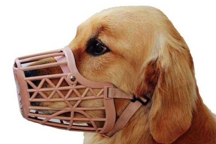 museruola per il cane