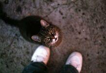 perchè i gatti mordono piedi e caviglie