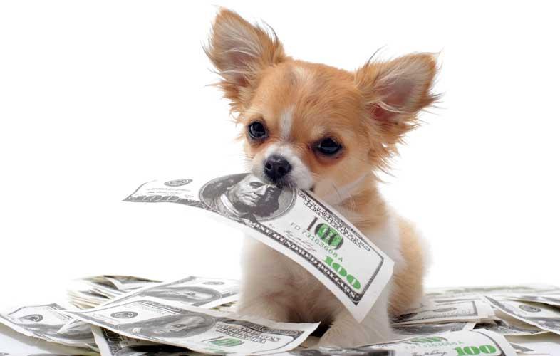 adozione cani rimborso