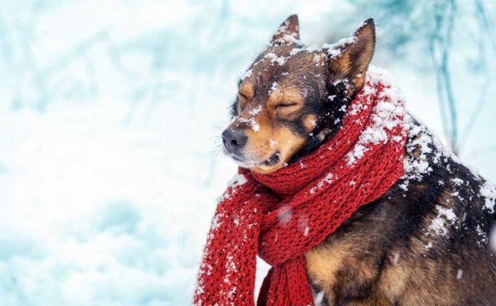 cani soffrono il cambio di stagione