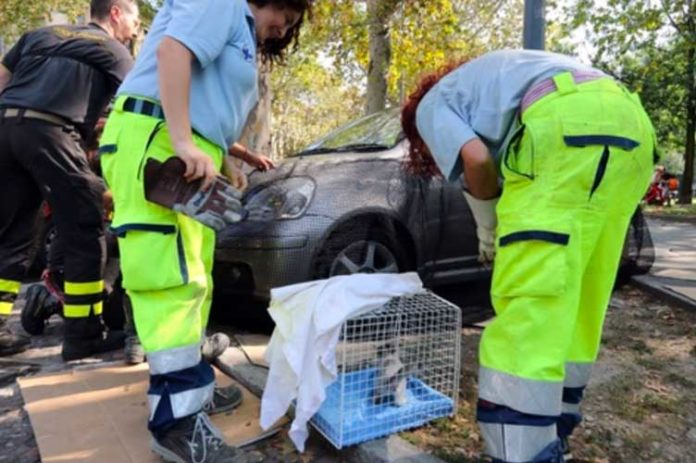 gatto intrappolato auto