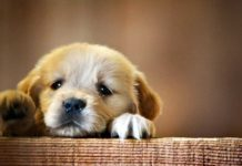 primo hospice per cani