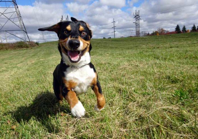 rimborso spese adozione cani