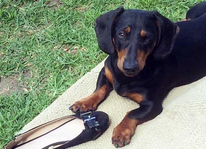 cane ruba le scarpe