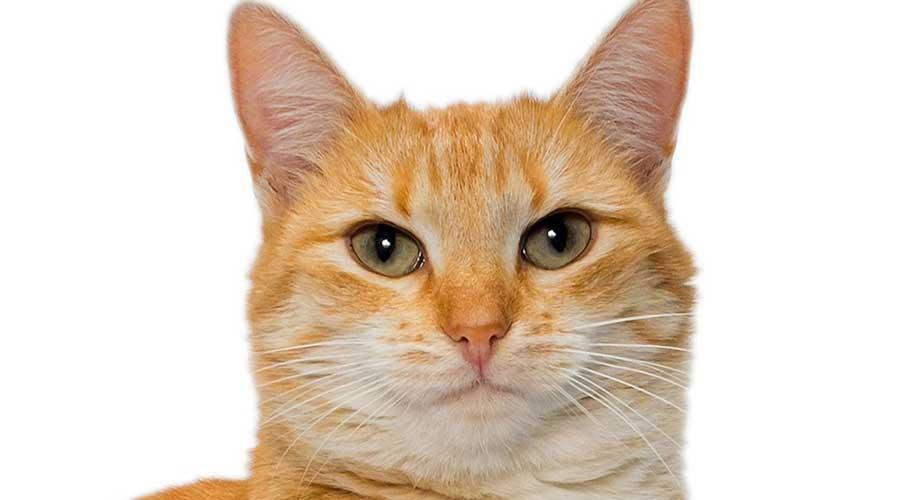emme fronte del gatto