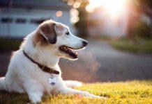 perchè ai cani piace prendere il sole