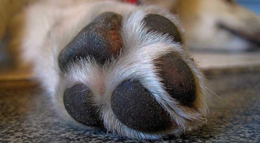 piedi cani odore pop corn