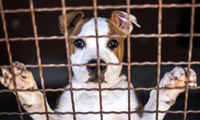 allevamento cani e gatti abusivo pedescala