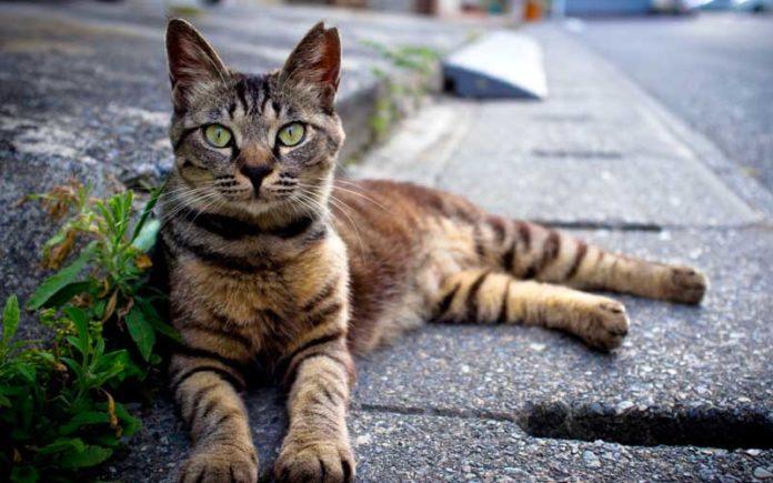 lecce donna multa soccorso gatto