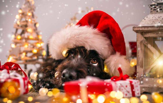 cani e gatti festività