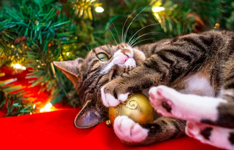 decorazioni natale gatto