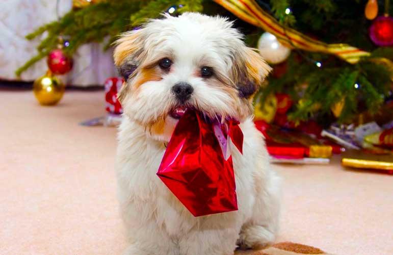regalare un cane a Natale