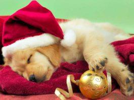regalare un cucciolo per Natale