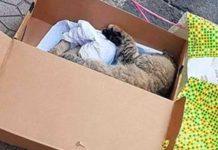 strage gatti salerno