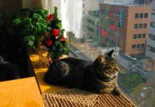 gatto cernusco anziano