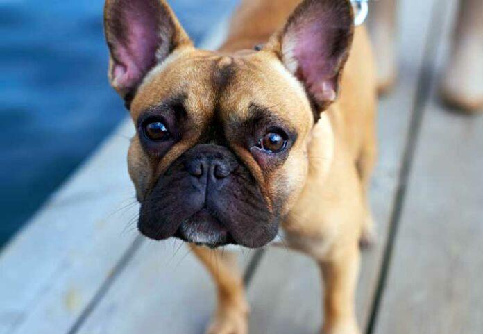 bocconi avvelnati cani palmanova