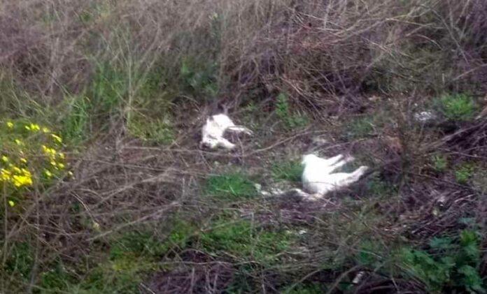 strage gatti poggiofranco