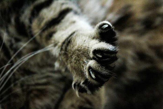amputazione unghie gatto