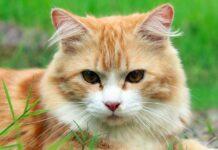 spara al gattino